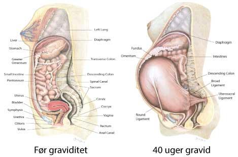 Graviditetsforandringer