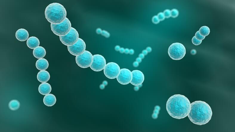 hæmolytiske streptokokker grp b