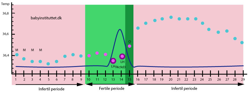 Tegning af hvornår en kvinde kan blive gravid; den fertile og de infertile perioder (og stigning i LH)