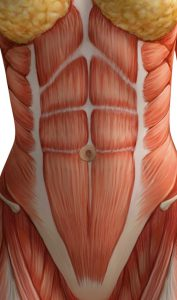 Her kan man se brystvævet, de lige mavemuskler og de ydre skrå mavemuskler på en veltrimmet ikke gravid kvinde.
