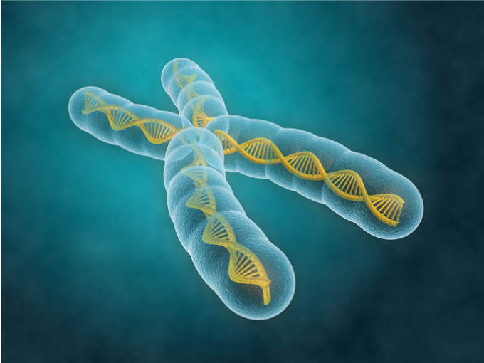 Kromosom fra menneske med synlig DNA streng