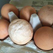 Æg der er alt for store i en æggebakke