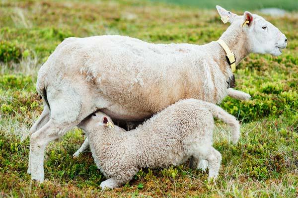 Dyre-mor sparker ungen væk, hvis det gør ondt