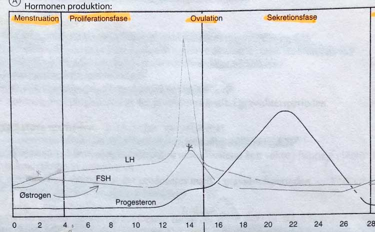 hormoner under graviditet